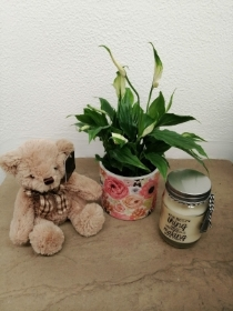 Plant of the Day, Teddy and Candle