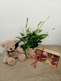 Plant of the Day, Teddy and Chocolates